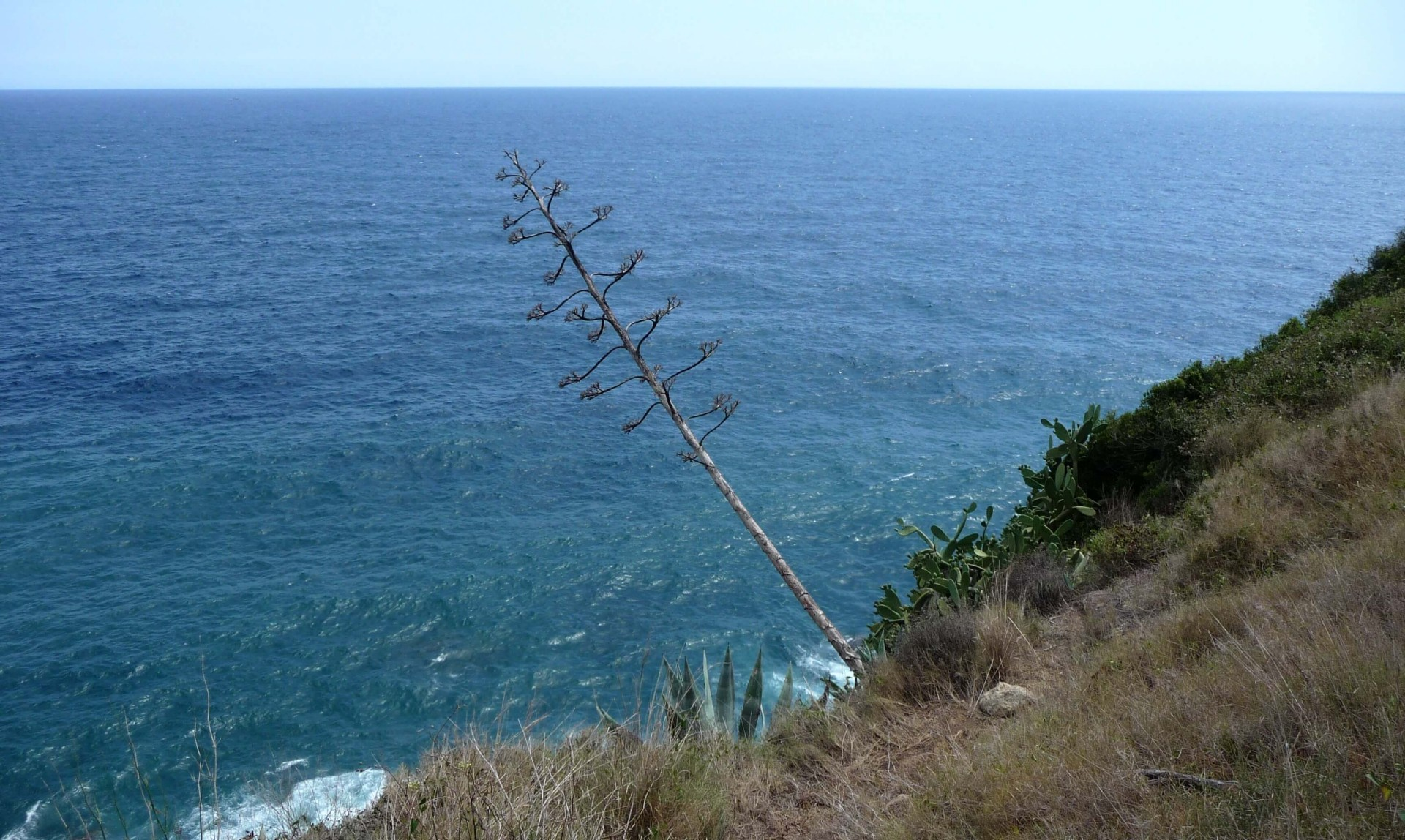 Agave am Meer in Lloret de Mar