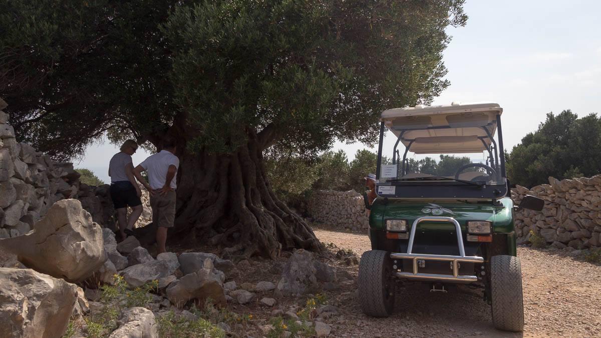 Der älteste Baum Stand 2016
