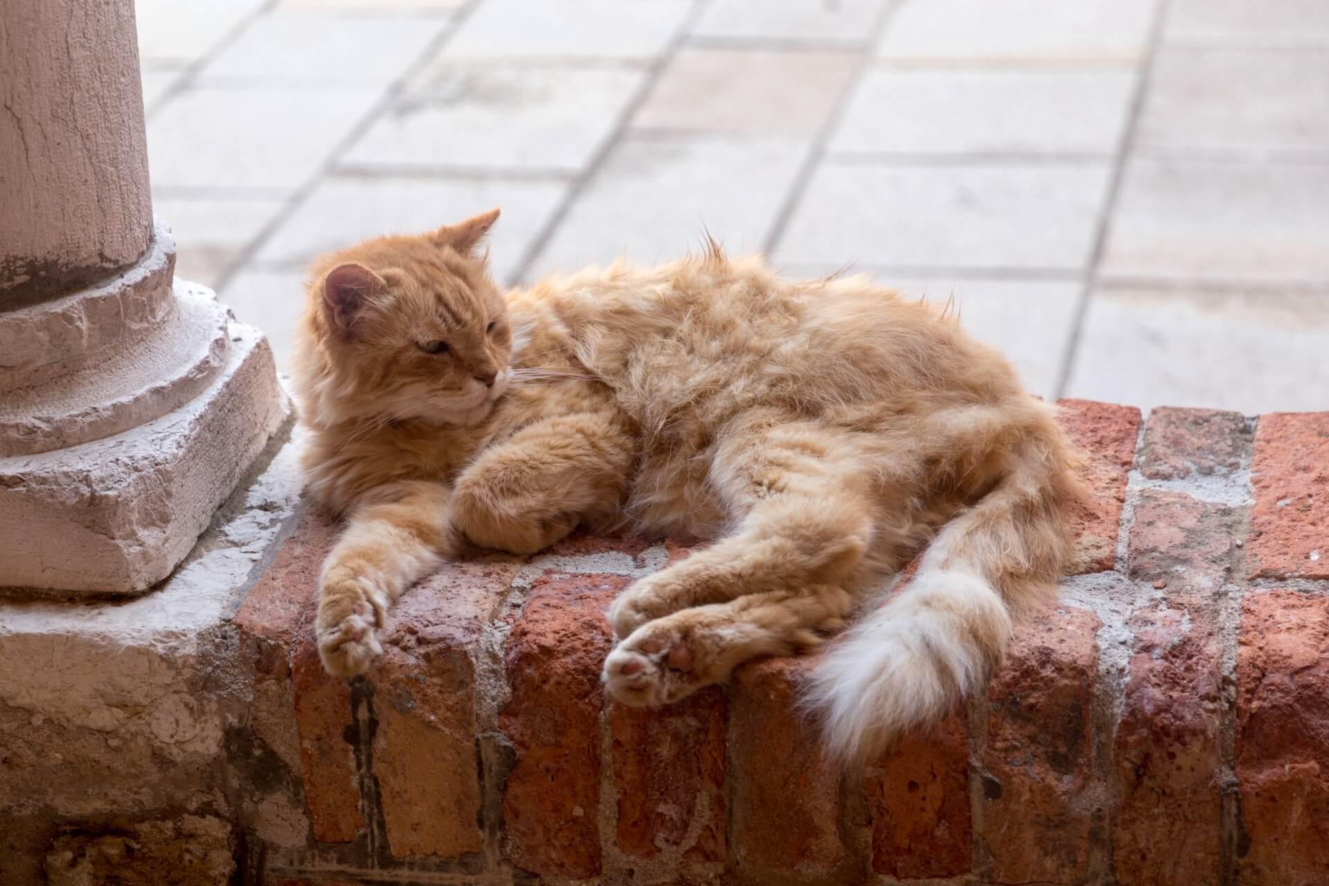 Katze möchte man sein