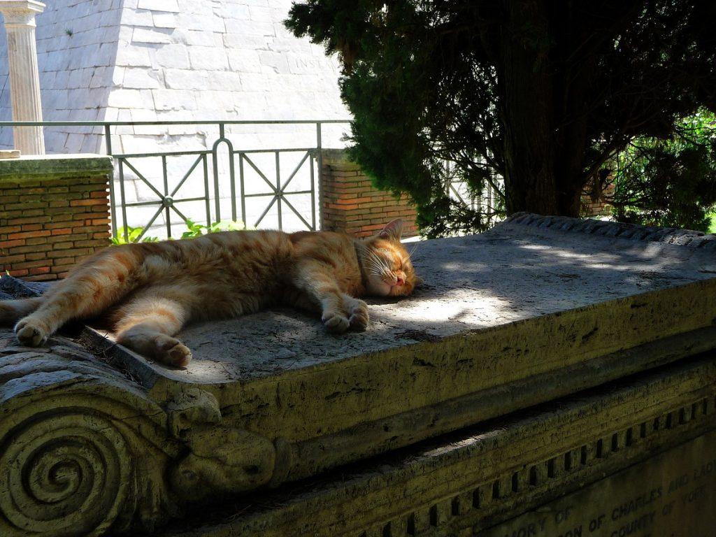 Protestantischer Friedhof, Rom, Katzen