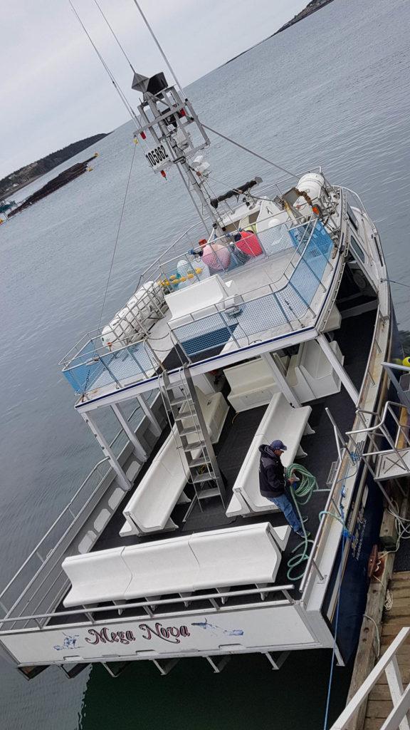 Brier Island Whale and Seabird Cruises, Boot Mega Nova
